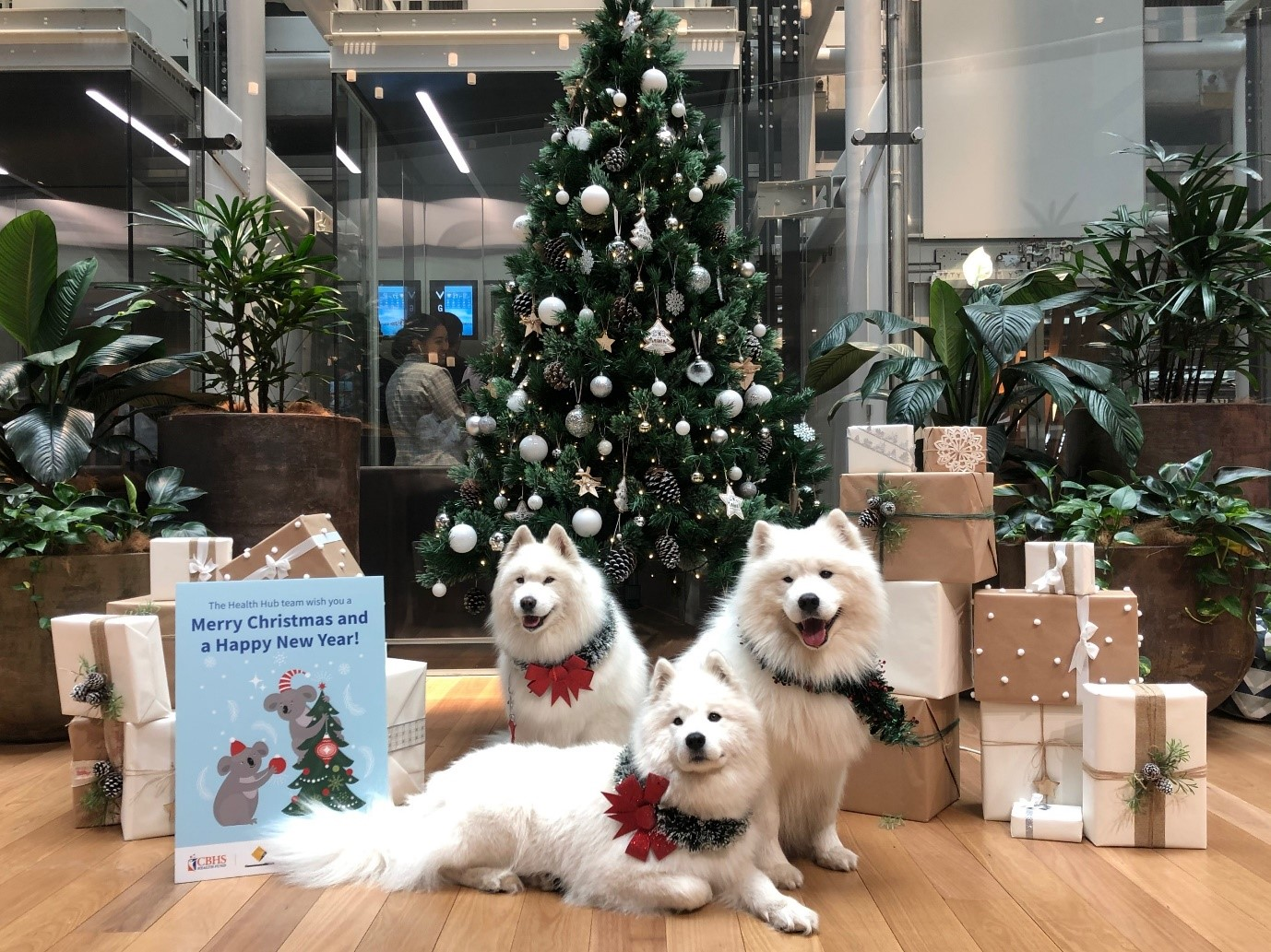 Samoyed dogs visited CommBank staff at last Christmas